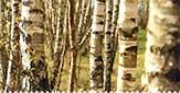 Kalendár zberu byliniek na mesiac marec