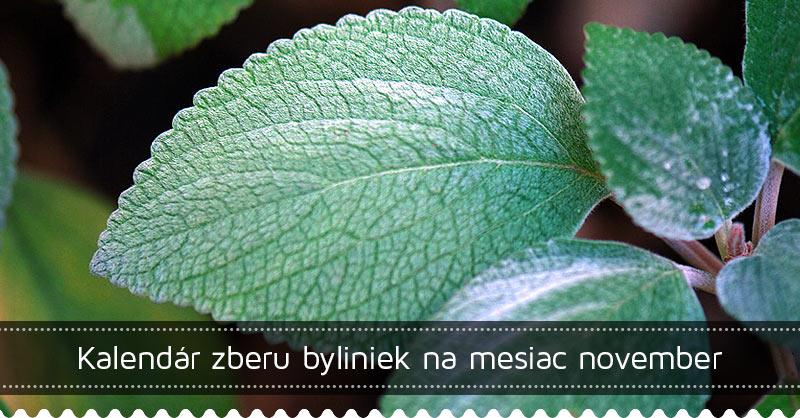 Kalendár zberu byliniek na mesiac november