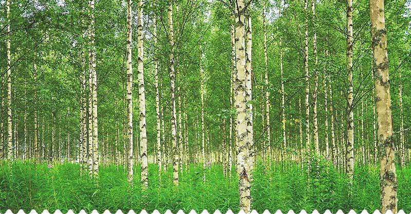 Bylinkové recepty na mesiac marec - breza