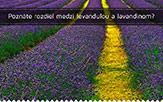 Poznáte rozdiel medzi levanduľou a lavandinom?