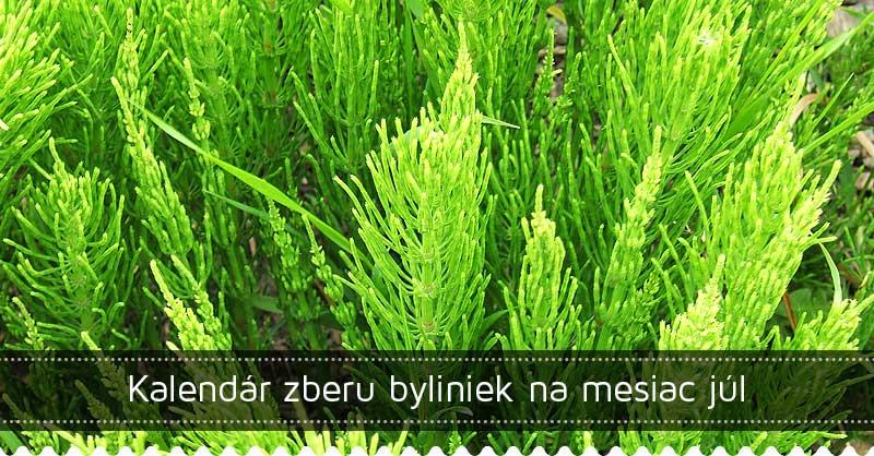 Kalendár zberu byliniek na mesiac júl