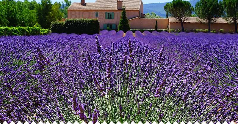 Letná aromaterapia