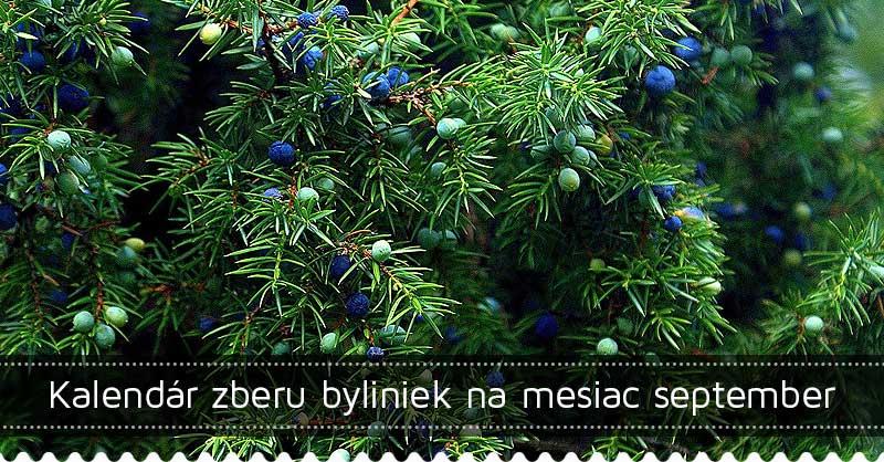 Kalendár zberu byliniek na mesiac september