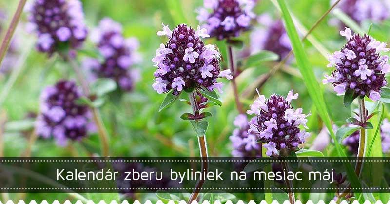 Kalendár zberu byliniek na mesiac máj