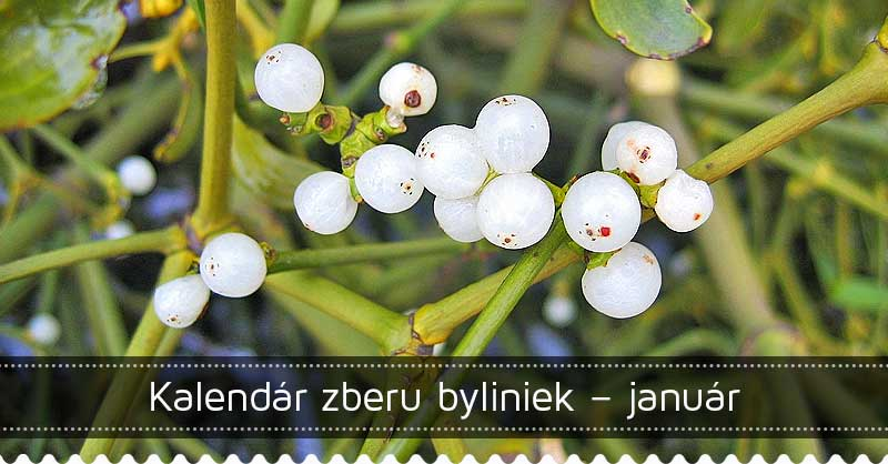Kalendár zberu byliniek – január