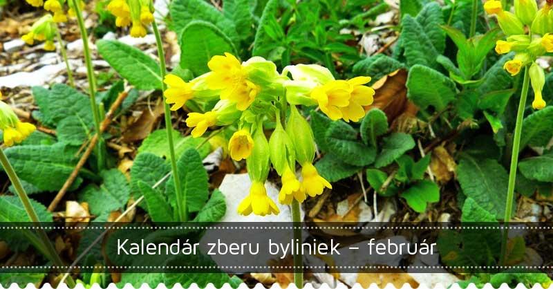 Kalendár zberu byliniek – február