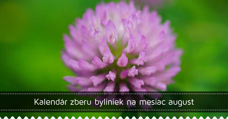 Kalendár zberu byliniek na mesiac august