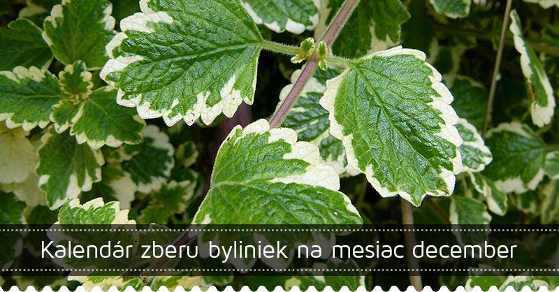 Kalendár zberu byliniek na mesiac december